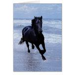 Un caballo salvaje y libre tarjeta