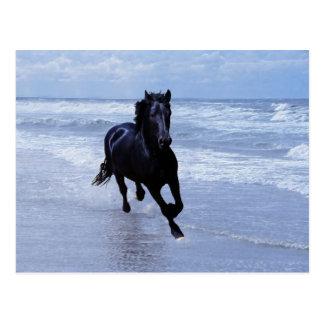 Un caballo salvaje y libre postal