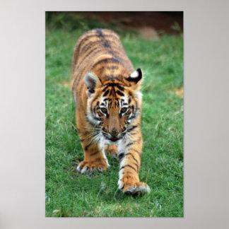 Un cachorro de tigre lindo de bebé impresiones