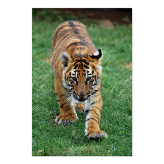 Un cachorro de tigre lindo de bebé póster