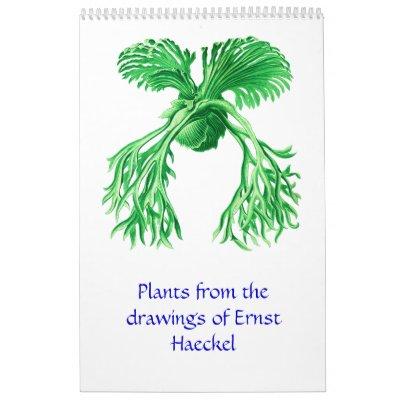 Un calendario 2012 de los dibujos de la planta