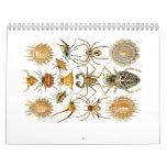 Un calendario de arañas de Ernst Haeckel.