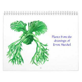 Un calendario de plantas de Ernst Haeckel