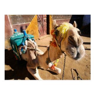Un camello amistoso aguarda a su jinete siguiente, tarjeta postal