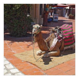 Un camello de Brown que coloca con la silla de Fotografía
