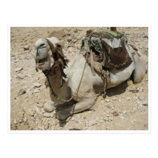 Un camello egipcio postal