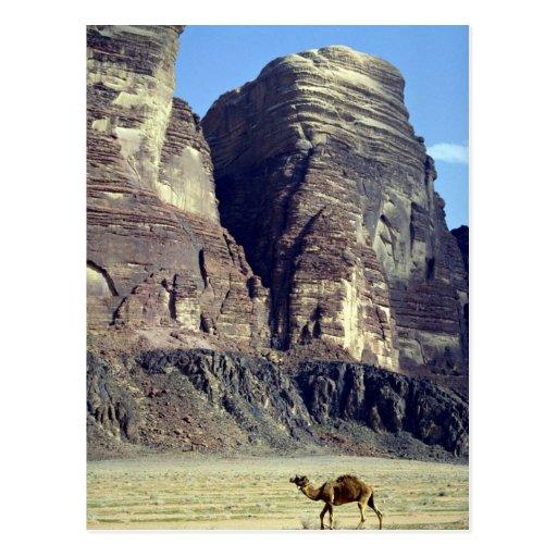 Un camello solo, desierto del ron del lecho de un  postal