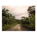 Un camino alejado de la selva postal