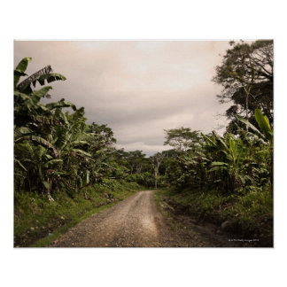 Un camino alejado de la selva póster