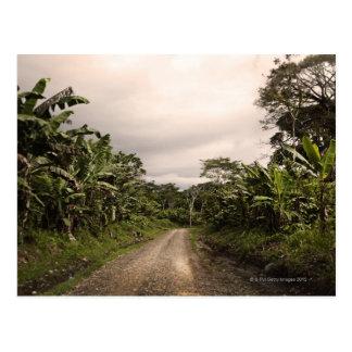 Un camino alejado de la selva tarjeta postal