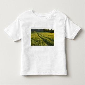 Un camino de campo en el pasto de Sabins en Camisas