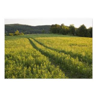 Un camino de campo en el pasto de Sabins en Montpe Fotografias