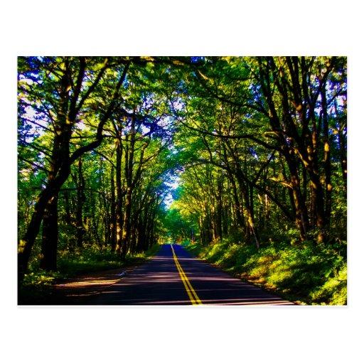 Un camino que corre a través de un bosque verde en postal