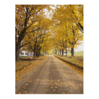 Un camino rural en Peacham Tarjetas Postales