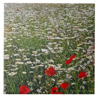 Un campo de las tierras de labrantío del blanco azulejo cuadrado grande