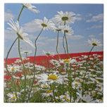 Un campo de las tierras de labrantío del blanco bu azulejo cerámica