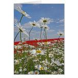 Un campo de las tierras de labrantío del blanco tarjeta de felicitación