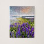 Un campo de los wildflowers del Lupine en la orill Puzzles