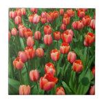 Un campo de tulipanes rojos tejas