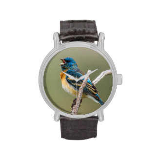 Un canto masculino del pájaro cantante del reloj de mano