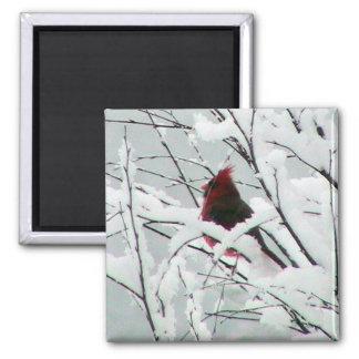 Un cardenal rojo hermoso en los arbustos cubrió in iman para frigorífico