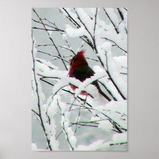 Un cardenal rojo hermoso en los arbustos cubrió in poster