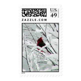 Un cardenal rojo hermoso en los arbustos cubrió sellos