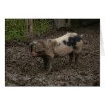 Un cerdo en suciedad tarjeta