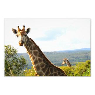 Un cierre encima de la foto de una jirafa fotografía