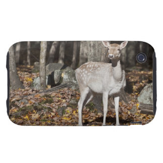 Un ciervo Blanco-atado (cervatillo) que se coloca Tough iPhone 3 Funda
