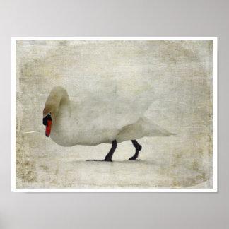 Un cisne que despierta impresiones