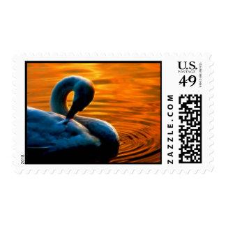 Un cisne que toma una nadada de última hora en la envio