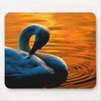 Un cisne que toma una nadada de última hora en la  tapete de raton