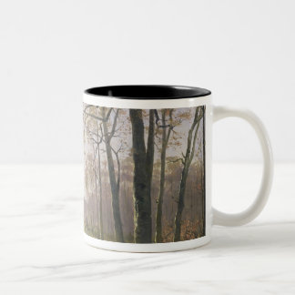 Un claro en una madera otoñal, 1890 tazas de café