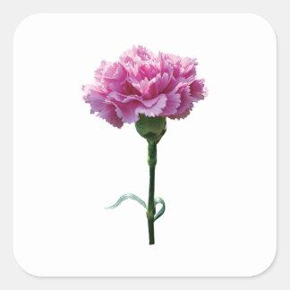 Un clavel rosado pegatina cuadrada