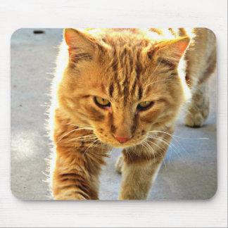 Un cojín de ratón del gato tapetes de raton