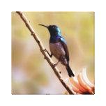 Un colibrí púrpura impresión en lienzo estirada