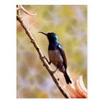 Un colibrí púrpura postal
