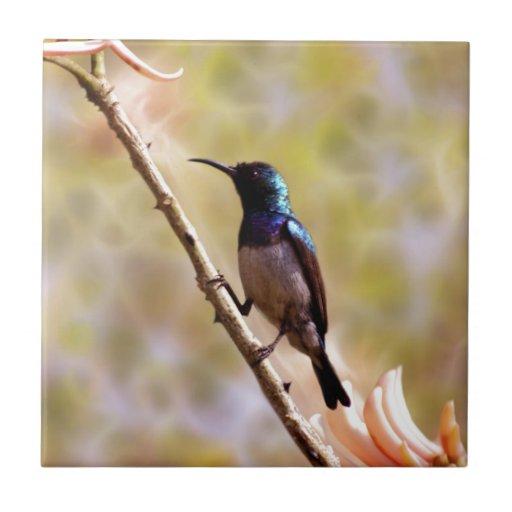 Un colibrí púrpura tejas  cerámicas