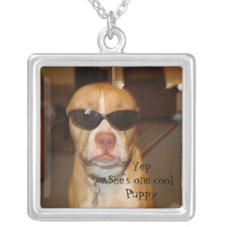 Un collar fresco de la foto del perrito