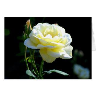 Un color de rosa perfecto a decir te amo o para ag tarjeta pequeña