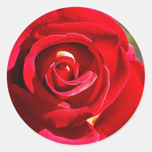 Un color de rosa perfecto pegatina redonda