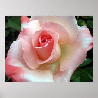 Un color de rosa por cualquier otro nombre. póster