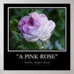 Un color de rosa rosado poster
