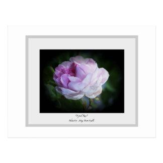 """""""Un color de rosa rosado """" Postal"""