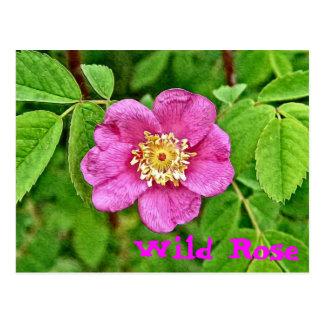 Un color de rosa salvaje postal