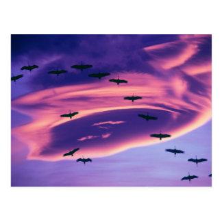 Un compuesto de la foto de Sandhill cranes en Tarjeta Postal