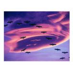Un compuesto de la foto de Sandhill cranes en vuel Tarjetas Postales