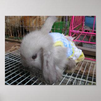 Un conejo en un かわいい幸せ del vestido posters