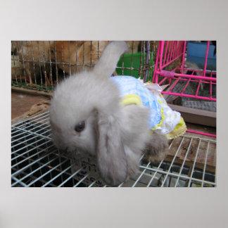 Un conejo en un かわいい幸せ del vestido póster